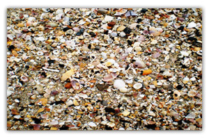 หาดนพรัตน์ธารา-เปลือกหอย