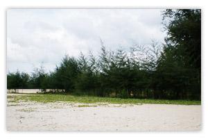 หาดนพรัตน์ธารา-ทิวสนและผักบุ้งทะเล
