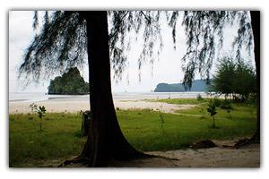 หาดนพรัตน์ธารา-มองผ่านทิวสน