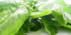 มากินผักเพื่อสุขภาพกันดีกว่า