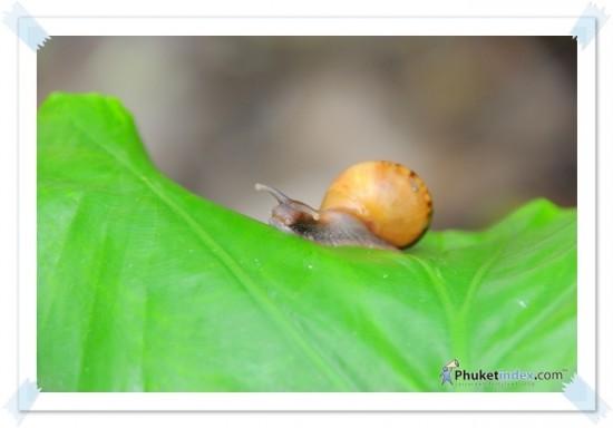 Snail cute cute !!